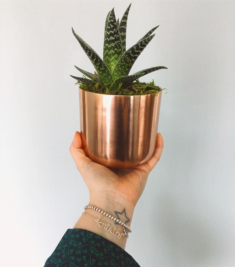 target succulent copper pot